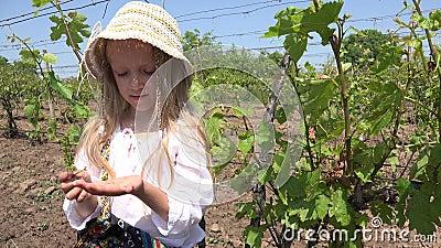 4.000 niños comiendo uvas en viñedo, retrato infantil rústico, niñas jugando en campo almacen de video