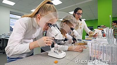 Niños en la clase de Biología que aprende sobre insectos usando el microscopio almacen de metraje de vídeo