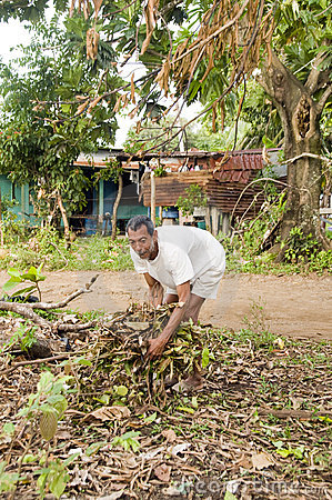 Nicaraguan man gathering brush for fire
