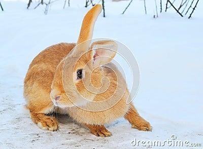 Nice bunny on snow