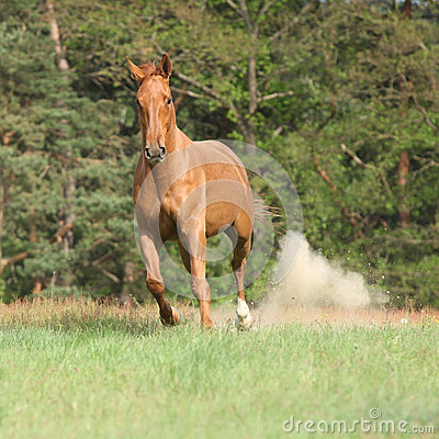Nice Chestnut Horse Ru...