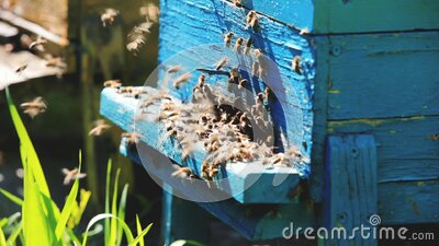 Beehive and bees over honey farm stock footage