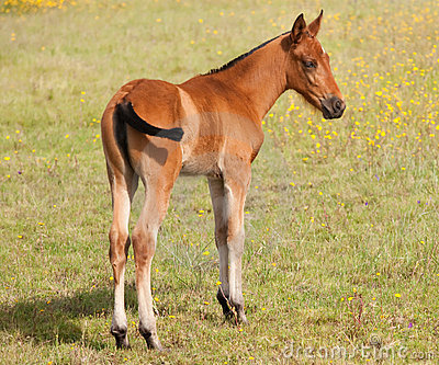 Nice colt in the field