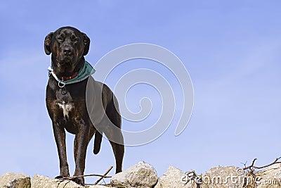 Nice dog