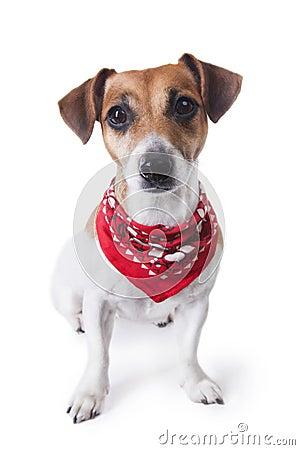 Nice dog with bandana