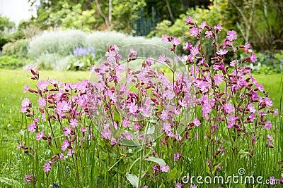 Nice garden flowers