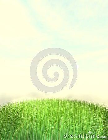 Nice Grass Lawn Background