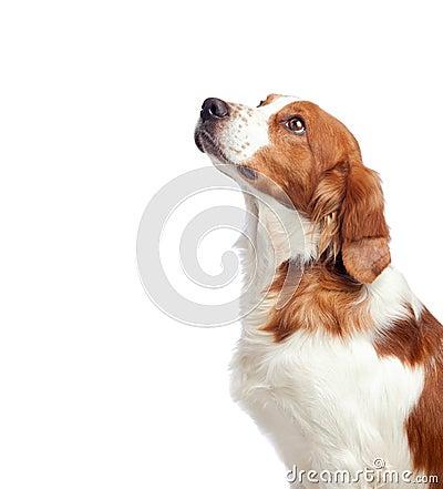 Nice hunting dog