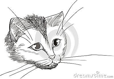 Nice kitty head