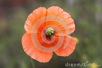 Nice orange flower
