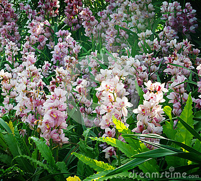 Nice orchid