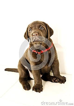 Nice puppy dog