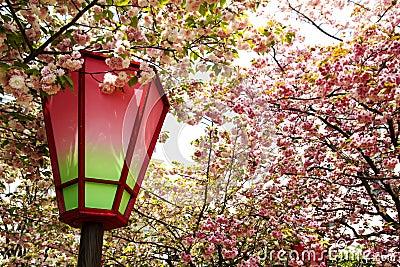 Nice sakura background