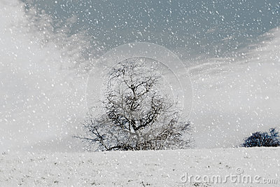 Nice winter landscape with trees