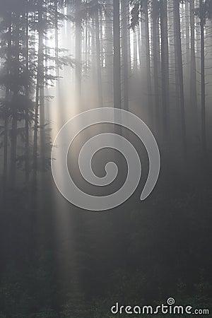 Niebla en bosque