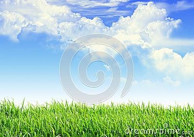 Niebo trawa