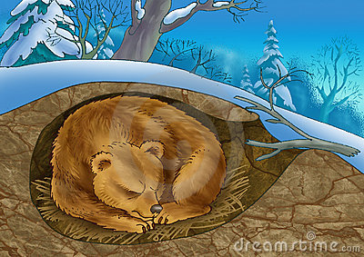 Niedźwiadkowa melina