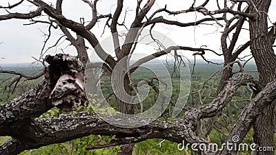 Niederlassungen von trockenen toten Bäumen Raues Klima Die Bäume sterben Tote Bäume in der Waldmystischen Märchenatmosphäre stock video footage