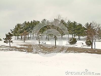 śnieg park