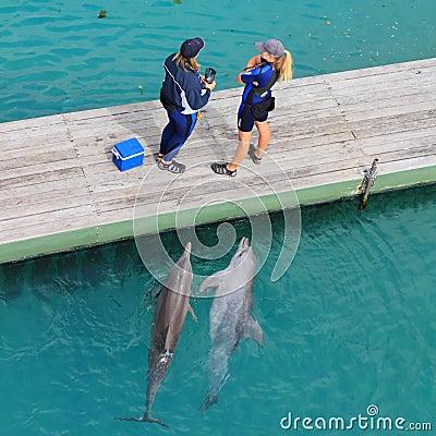 Nieuwsgierige dolfijnen en twee vrouwen Redactionele Stock Afbeelding