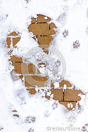Nieve en la tierra