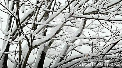 Nieve que falla en árbol almacen de metraje de vídeo