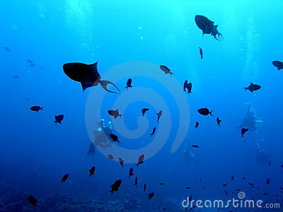 Niger Trigger fish in Deep Blue