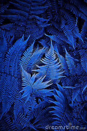 Free Night Fern Stock Photography - 6220102