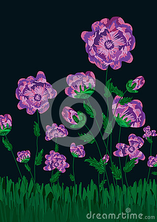 Night Flowers Field Blossom_eps