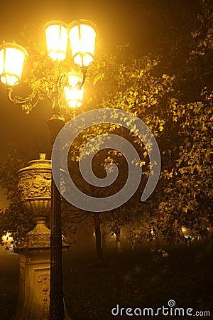 Night foggy park