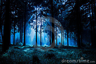 Night Forest Royalty Free Stock Images Image 23345869