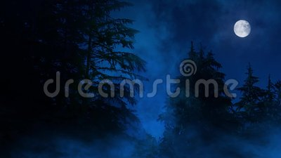 Night Forest Misty Swamp And Moon stock footage