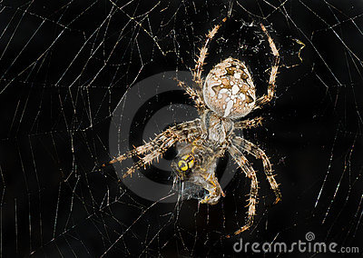 Night image of spider wrapping its victim