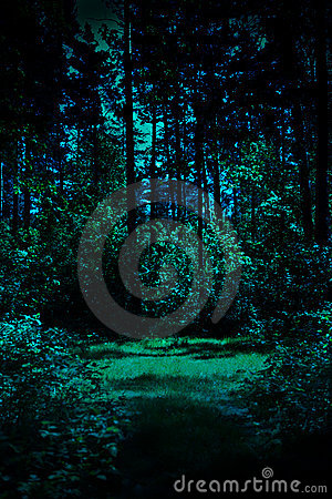 Free Night In A Forest Stock Image - 12547831