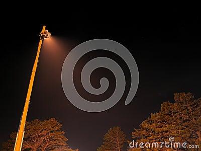 Night light with tree-tops