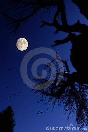 Night with moon and birds