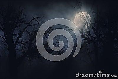 Night ravens