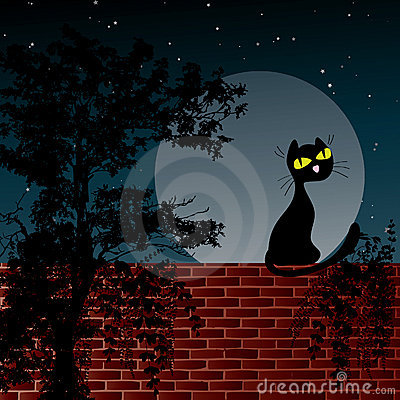 Night scene with moon and black cat