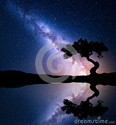 Free Night Scene With Milky Way And Old Tree Stock Photography - 91075592