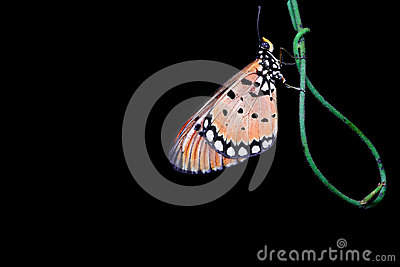 Night Shot Of A Butterfly Stock Photo Cartoondealercom 80666304