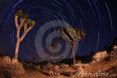 Night Shot of Star Trails in Joshua Tree National