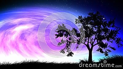 Night sky and tree loop Stock Photo