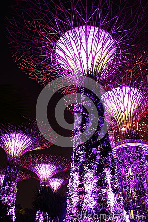 Night view of super trees in garden by the bay