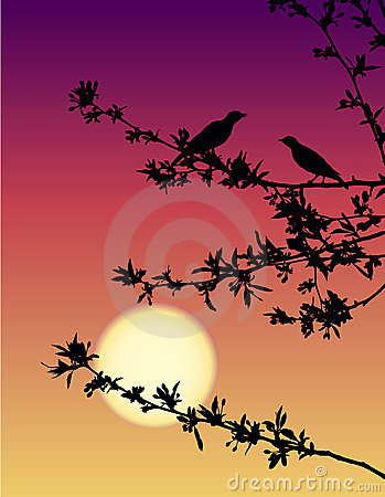 Nightingales at sunset