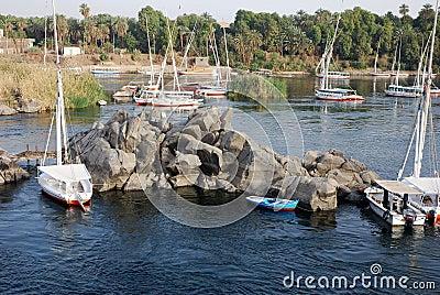 Nile feluccas