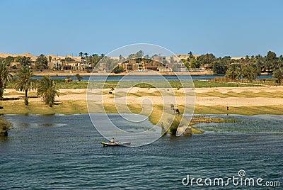 Nile shore life