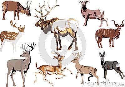 Nine horned animal