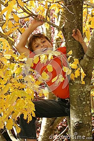 Niño que sube para arriba un árbol