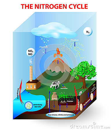 diagram of the nitrogen cycle in nature simplified diagram of the nitrogen cycle