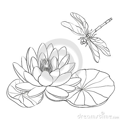 N nuphar et libellule image stock image 31593231 - Nenuphar dessin ...